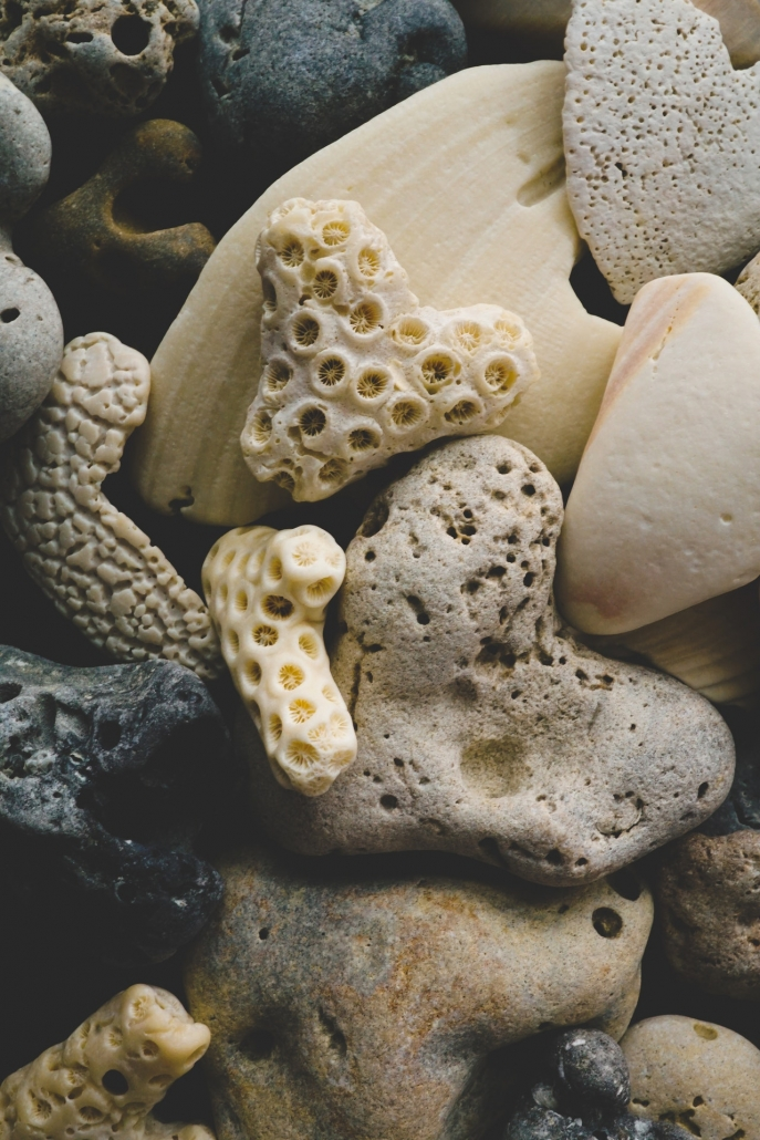 shells and carbonates
